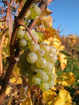 Das Weinanbaugebiet Western Cape