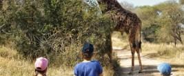 Giraffe im Camp kleiner-2
