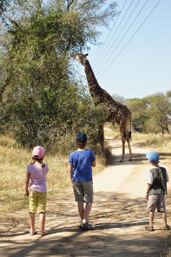 Safaris mit Kindern und Jugendlichen